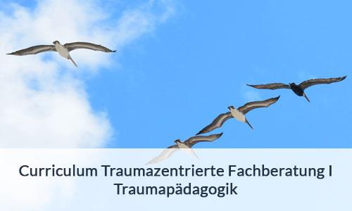 Curriculum Traumazebtrierte Fachberatung | Traumapädagogik